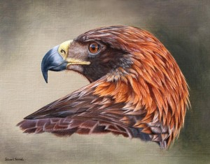 Golden Eagle Portrait.