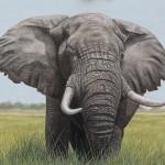 Bull Elephant oil painting