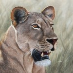 lioness. Oil painting