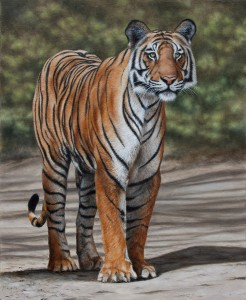 Bengal Tiger. Oil Painting