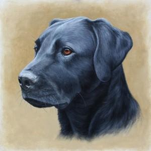 Black Labrador Oil Painting