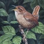 wren bird oil painting