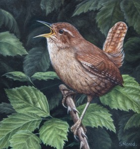 wren bird oil painting