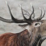 Red Deer Stag. Oil painting