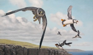 Peregrine falcon oil painting.