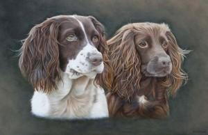 dog-portraits-springer-spaniel