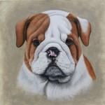 english-bulldog-dog-portrait-painting