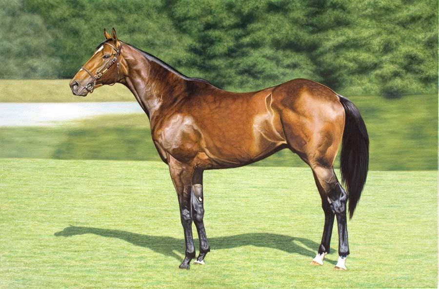 Equine Oil Paintings