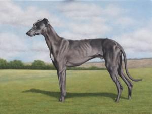 pet portraits greyhound