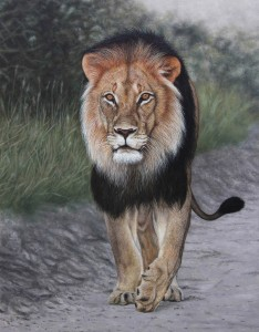 Black Maned Lion. Oil on panel