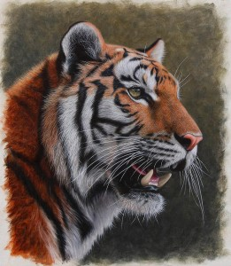 Siberian Tiger. Oil on panel